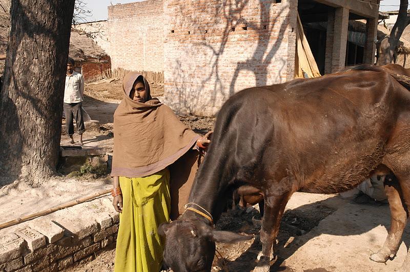 Social Entrepreneur Creates Dairy Jobs Where No One Else Dares to Go