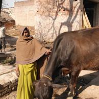 India: My 5-Star Experience in Uttar Pradesh