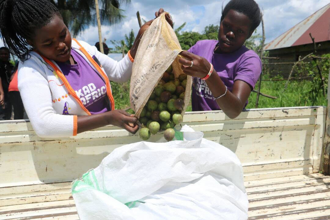KadAfrica: Empowering Girls Through Passion Fruit